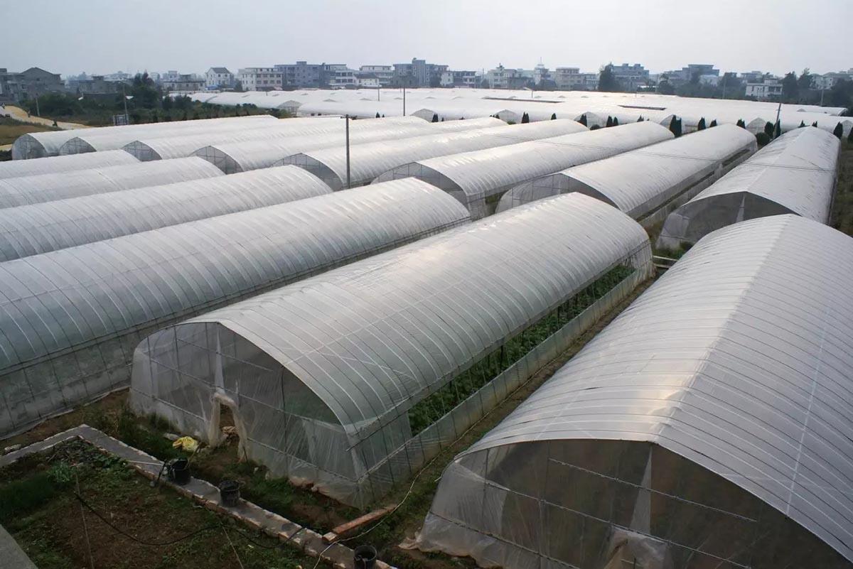 3 Loại vật liệu lợp nhà kính nông nghiệp hiệu quả hàng đầu